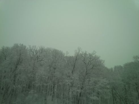Snow covered trees in Connecticut.  Say, it's winter in Bangalore, too.  Wonder what the snowfall total is there?